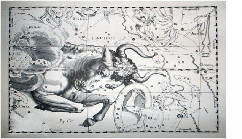Изображение созвездия Тельца в звездном атласе Иоганна Гевелия