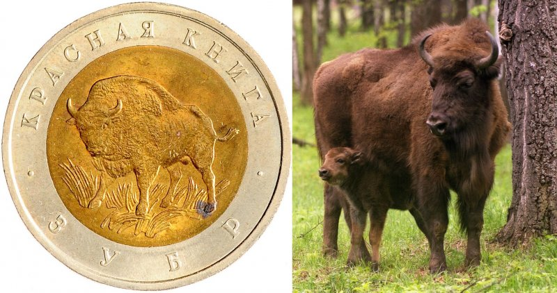 Реверс монеты «Зубр» 1994 г. / Самка зубра с теленком