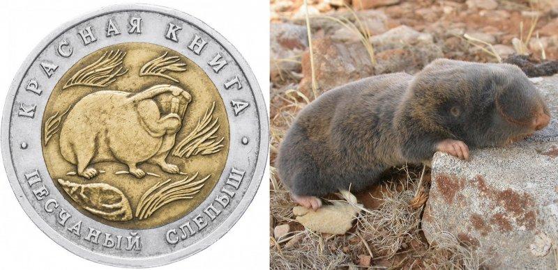 Реверс монеты «Песчаный слепыш» 1994 г. / Песчаный слепыш