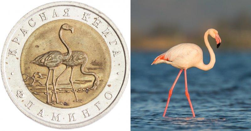 Реверс монеты «Фламинго» 1994 г. / Фламинго