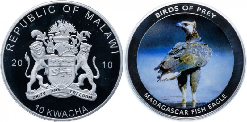 "10 квача ""Мадагаскарский рыбный орёл"""