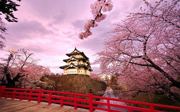 Япония, сезон цветения сакуры