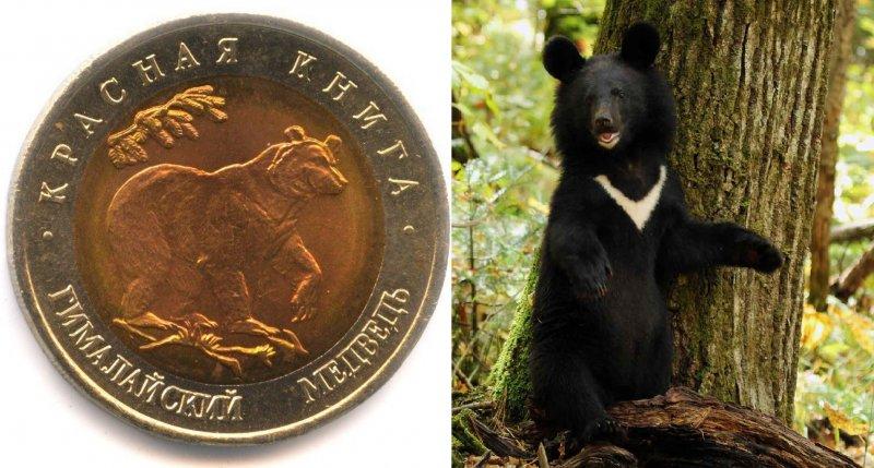 Реверс монеты «Гималайский медведь» 1993 г. / Гималайский медведь
