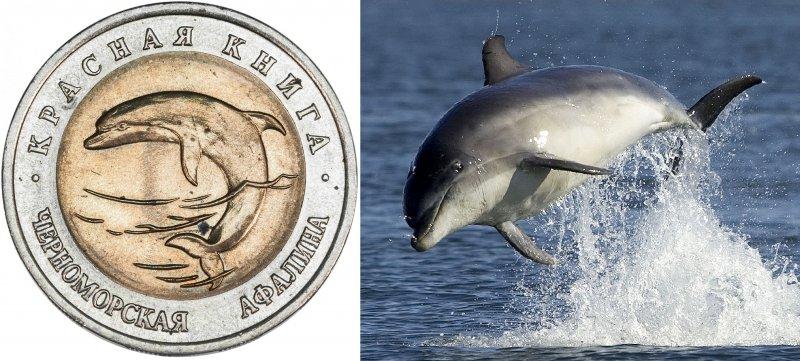 Реверс монеты «Черноморская афалина» 1993 г. / Черноморская афалина
