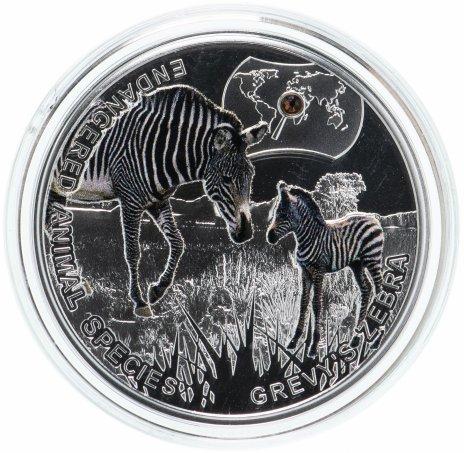 купить Ниуэ 1 доллар 2014 «Исчезающие виды-зебра Греви»