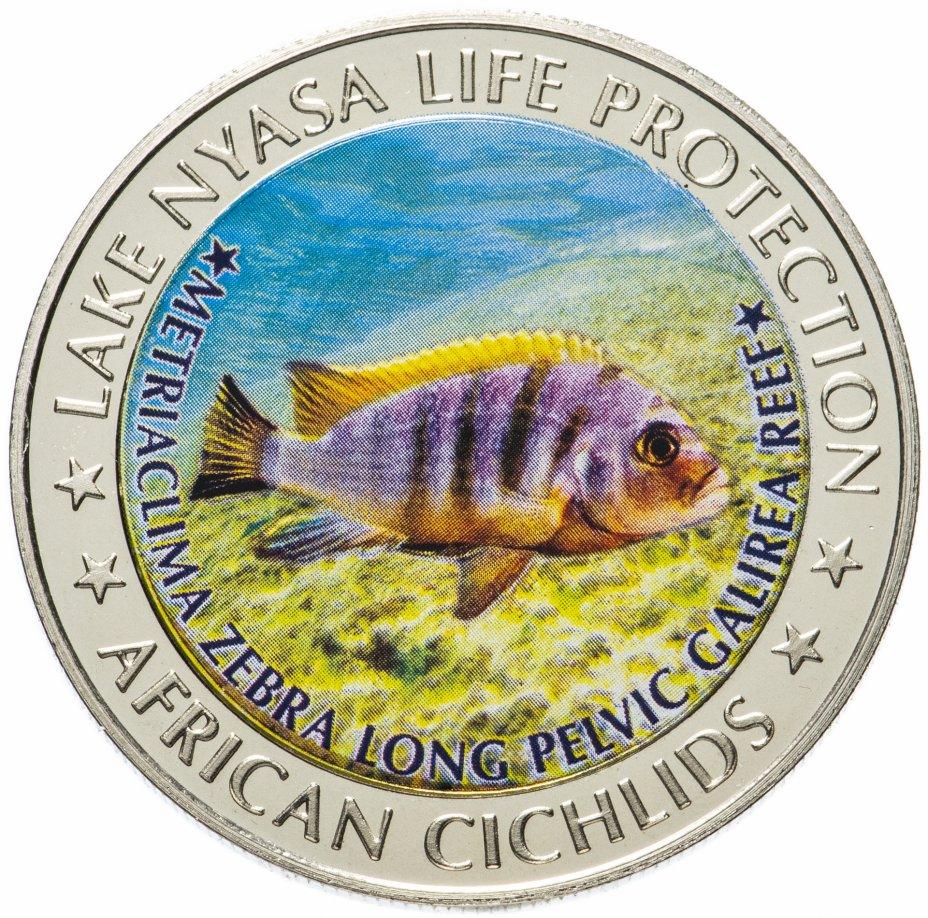 купить Малави 5 квача 2010 Озеро Ньяса Африканские цихлиды Одна рыба
