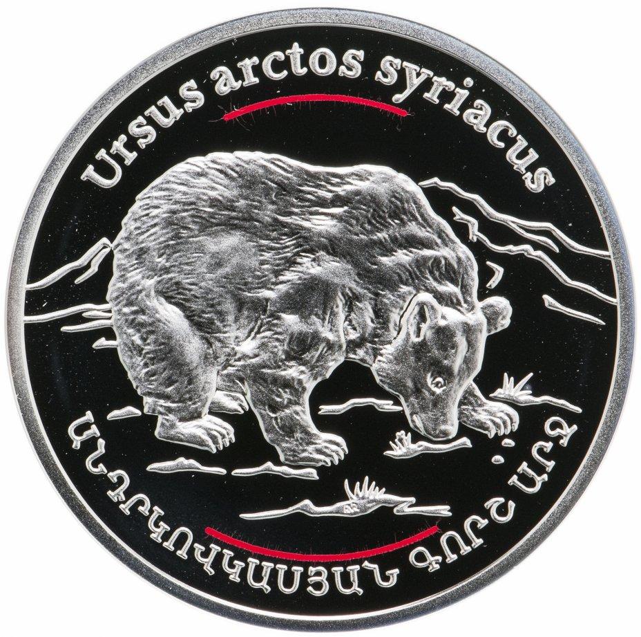 купить 100 драмов 2006  Сирийский бурый медведь