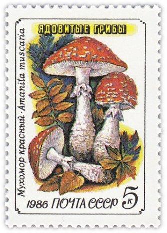 """купить 5 копеек 1986 """"Ядовитые грибы: Красный мухомор"""""""