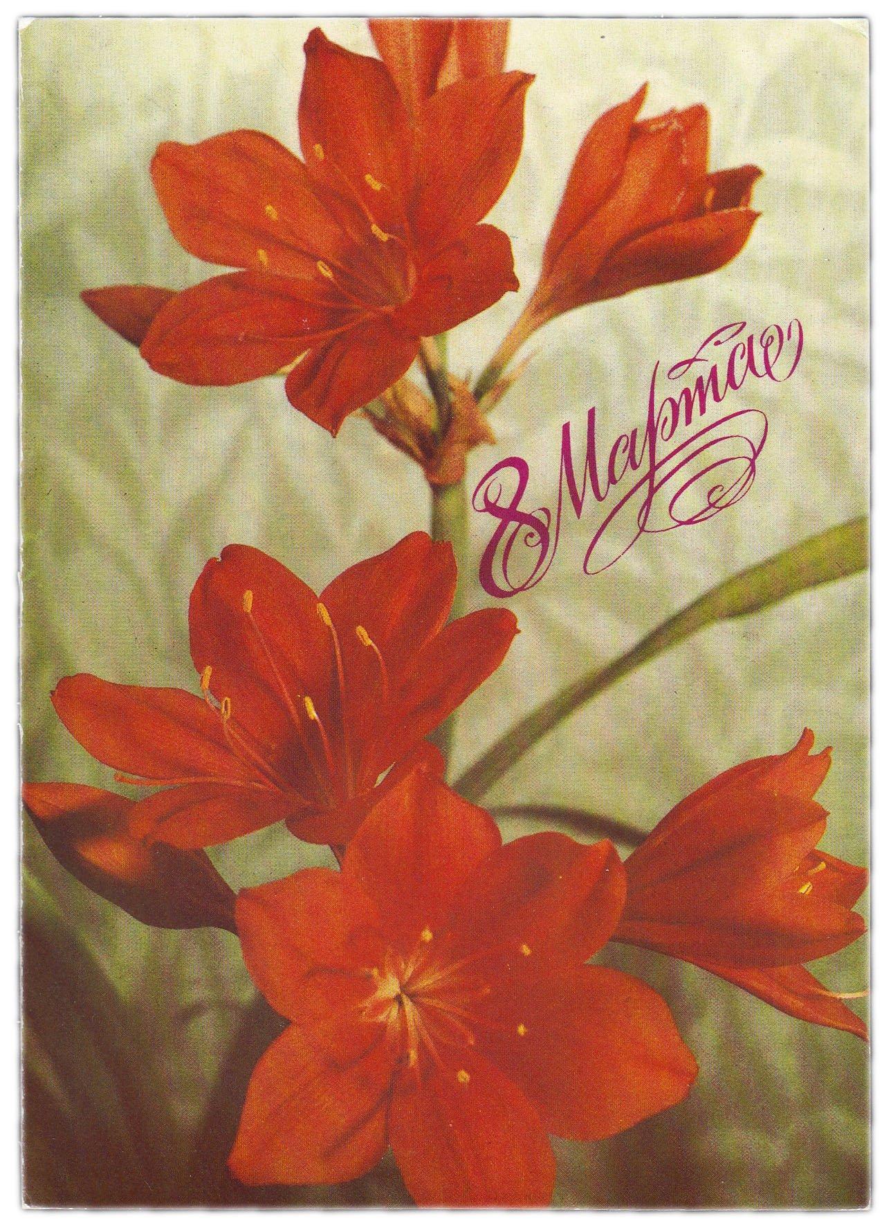 С 8 марта открытки с лилиями