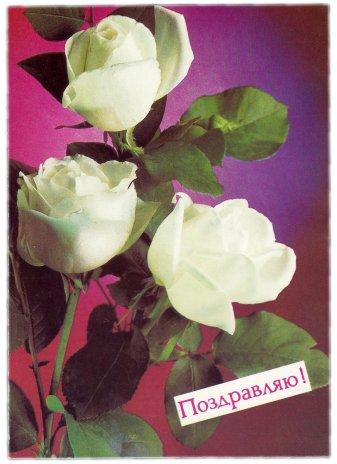 """купить Открытка (почтовое вложение) """"Поздравляю"""" фот. Костенко 1988"""