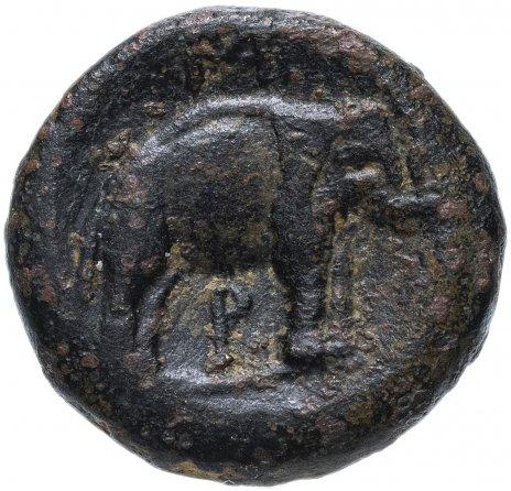 купить Государство Селевкидов, Селевк I Никатор, 311-305 годы до Р.Х., AE19. слон