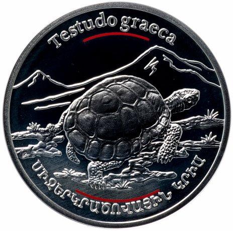 """купить Армения 100 драмов 2006 """"Красная книга - Средиземноморская черепаха"""""""