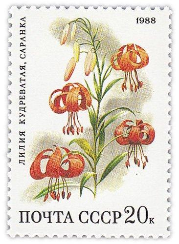 """купить 20 копеек 1988 """"Степные растения: Кудреватая лилия, саранка"""""""